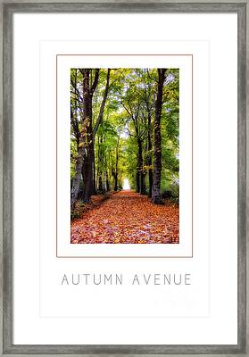 Autumn Avenue Poster Framed Print by Mike Nellums