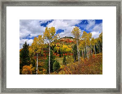 Autumn Beauty Limited Edition Framed Print by Greg Norrell