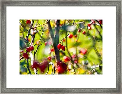 Autumn Berries  Framed Print by Stelios Kleanthous