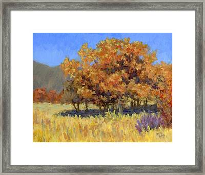 Autumn Blaze Framed Print by David King