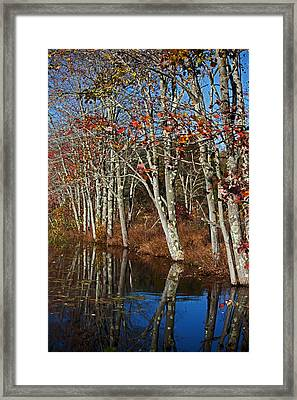 Autumn Blue Framed Print by Karol Livote