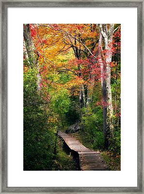 Autumn Boardwalk Framed Print by Bill Wakeley