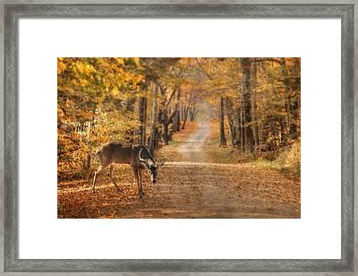 Autumn Buck Framed Print by Lori Deiter