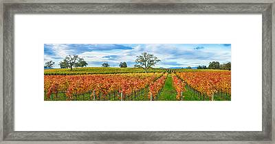 Autumn Color Vineyards, Guerneville Framed Print by Panoramic Images