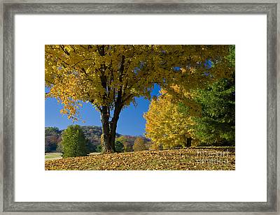 Autumn Colors Framed Print by Brian Jannsen