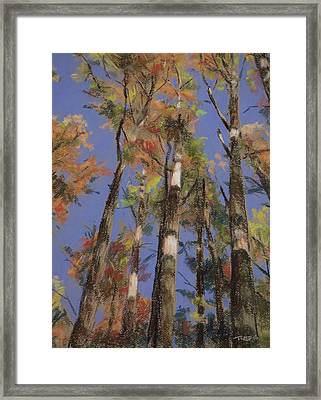 Autumn Colors Framed Print by Christopher Reid