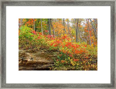 Autumn Colors Framed Print by Lorna Rogers Photography