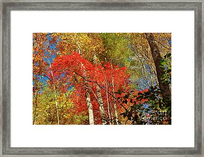 Autumn Colors Framed Print by Patrick Shupert