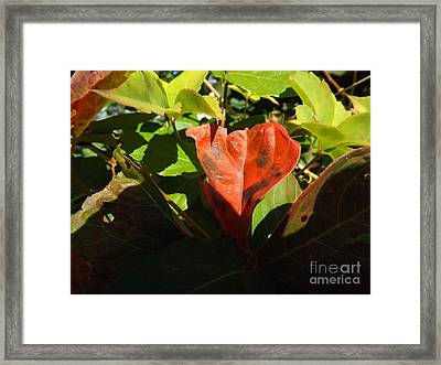 Autumn Colors Framed Print by Robyn King