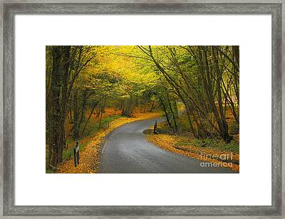 Autumn Colours Framed Print by Stephen Dowdell