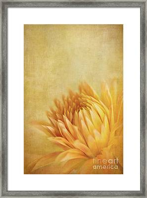 Autumn Delight Framed Print by Beve Brown-Clark Photography