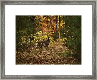 Autumn Doe And Fawn Framed Print by Thomas Young