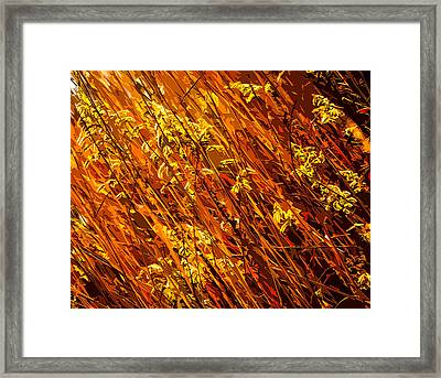 Autumn Field Framed Print by Brian Stevens
