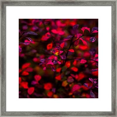 Autumn Flames 2 - Square Framed Print by Alexander Senin