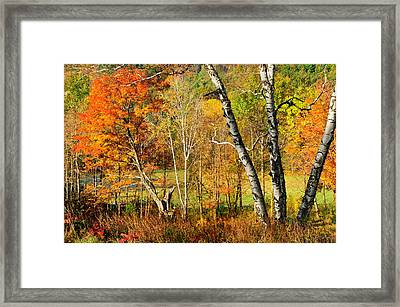 Autumn Forest Scene - Litchfield Hills Framed Print by Thomas Schoeller