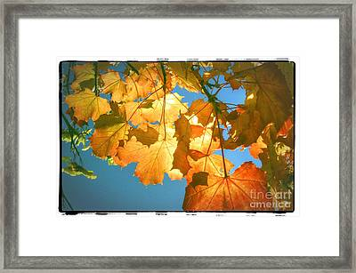 Autumn Found Framed Print by Spikey Mouse Photography