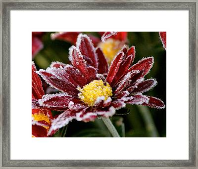 Autumn Frost Framed Print by Tiffany Erdman