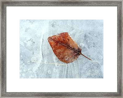 Autumn Frozen Framed Print by Mike  Dawson