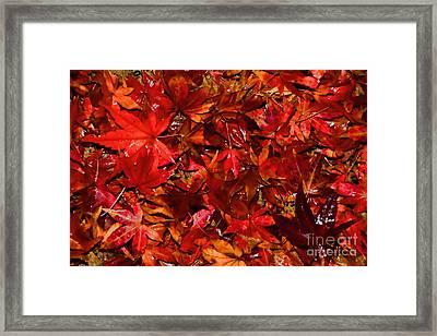 Autumn Glow By Kaye Menner Framed Print by Kaye Menner