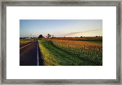 Autumn Gold Framed Print by Cricket Hackmann