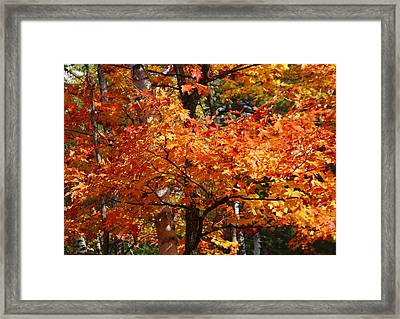 Autumn Gold Framed Print by Pat Speirs
