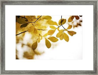 Autumn Gold Framed Print by Priska Wettstein