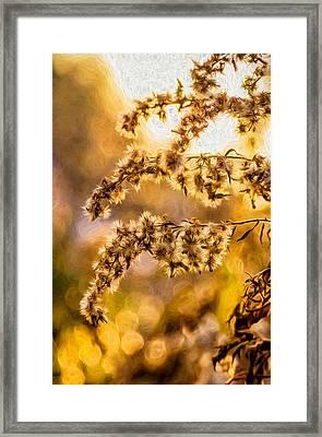 Autumn Goldenrod - Paint  Framed Print by Steve Harrington