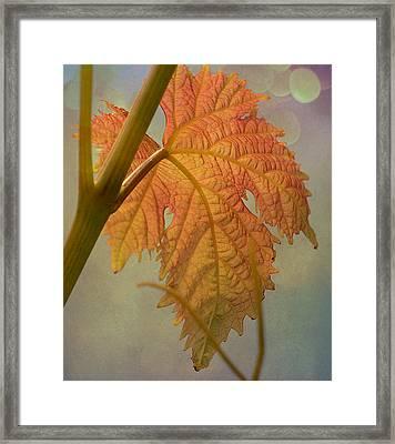 Autumn Grapevine Framed Print by Fraida Gutovich