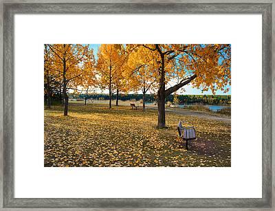 Autumn In Calgary Framed Print by Trever Miller