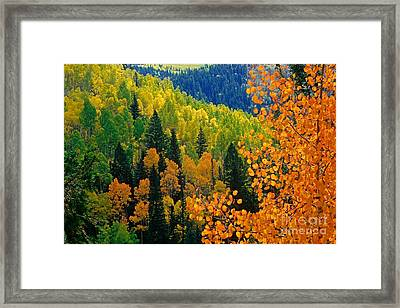Autumn In Colorado Framed Print by Richard and Ellen Thane