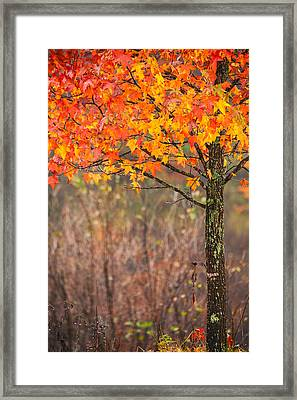 Autumn In Connecticut Framed Print by Karol Livote