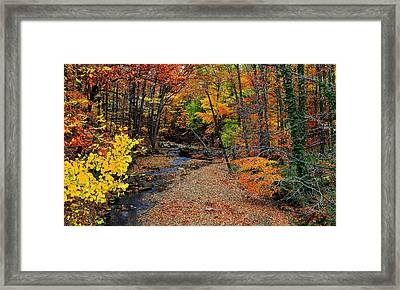 Autumn In Full Bloom Framed Print by Frozen in Time Fine Art Photography