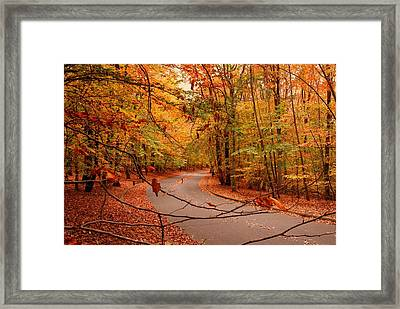 Autumn In Holmdel Park Framed Print by Angie Tirado