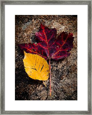 Autumn In The Spotlight Framed Print by David Patterson