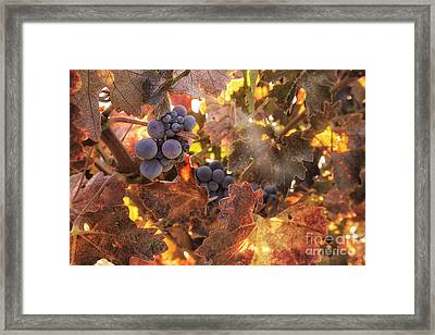Autumn In The Vineyard Framed Print by Michele Steffey