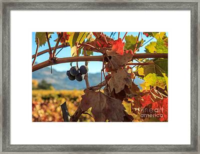 Autumn In The Wine Country Framed Print by James Eddy