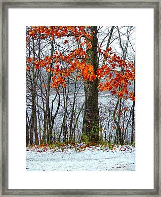 Autumn In Winter Framed Print by Julie Dant