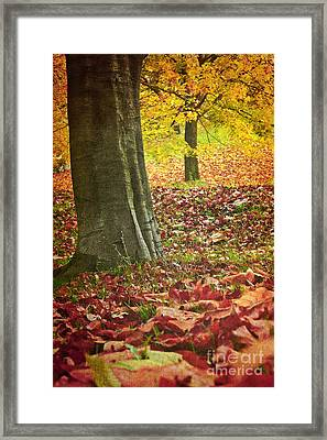 Autumn Iv Framed Print by Angela Doelling AD DESIGN Photo and PhotoArt