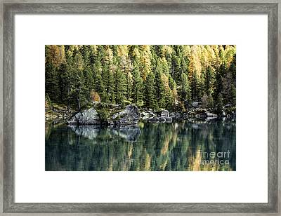 Autumn Larch Pines 1 Framed Print by Timothy Hacker