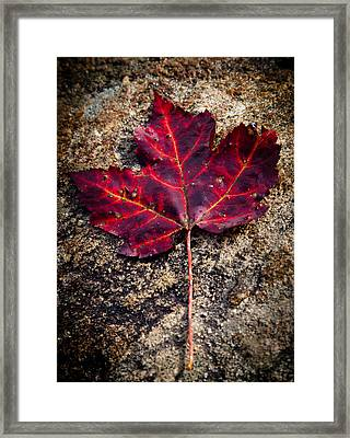 Autumn Leaf Framed Print by David Patterson