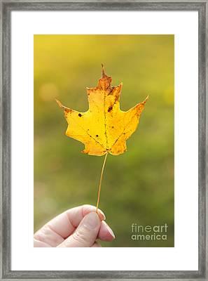 Autumn Leaf Framed Print by Diane Diederich