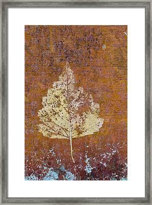 Autumn Leaf On Copper Framed Print by Carol Leigh