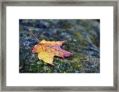 Autumn Leaf On Rocky Ledge Framed Print by Terri Gostola