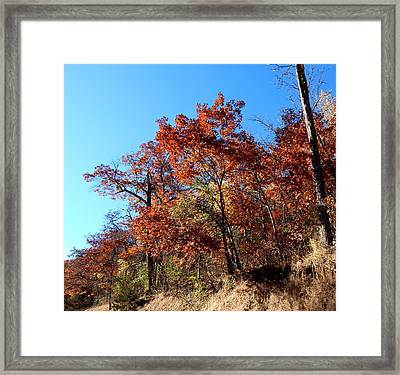 Autumn Leaning Framed Print by Wild Thing