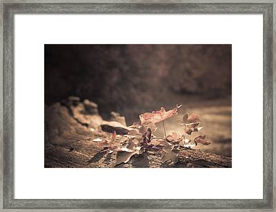 Autumn Leaves Framed Print by Amanda And Christopher Elwell
