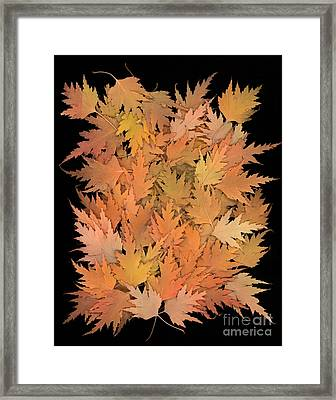 Autumn Leaves Framed Print by Cindy Singleton