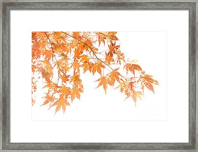 Autumn Leaves Framed Print by Diane Diederich