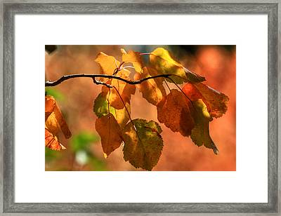 Autumn Leaves Framed Print by Donna Kennedy