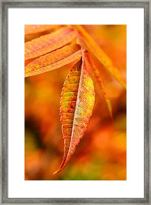 Autumn Leaves Framed Print by Gynt