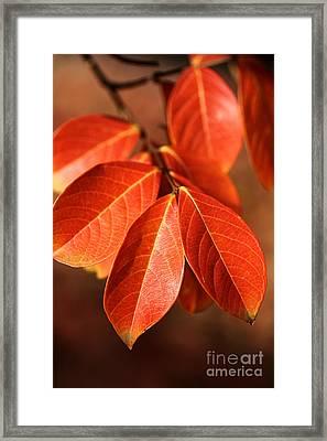 Autumn Leaves Framed Print by Joy Watson